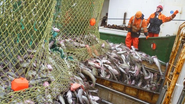 throw away bad fish