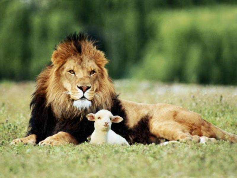 the kingdom of god--lion and lamb